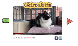 catroulette gatos cats