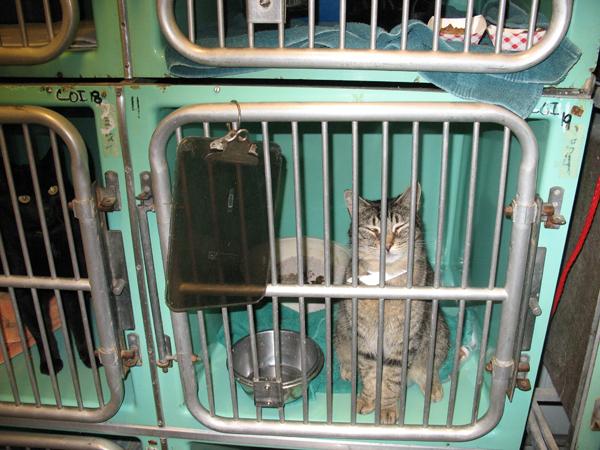 La masacre secreta de gatitos y cachorros de PETA