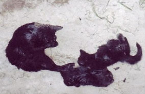peta-mata-gatitos-3