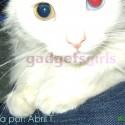 Heterocromía: Ojos de distinto color